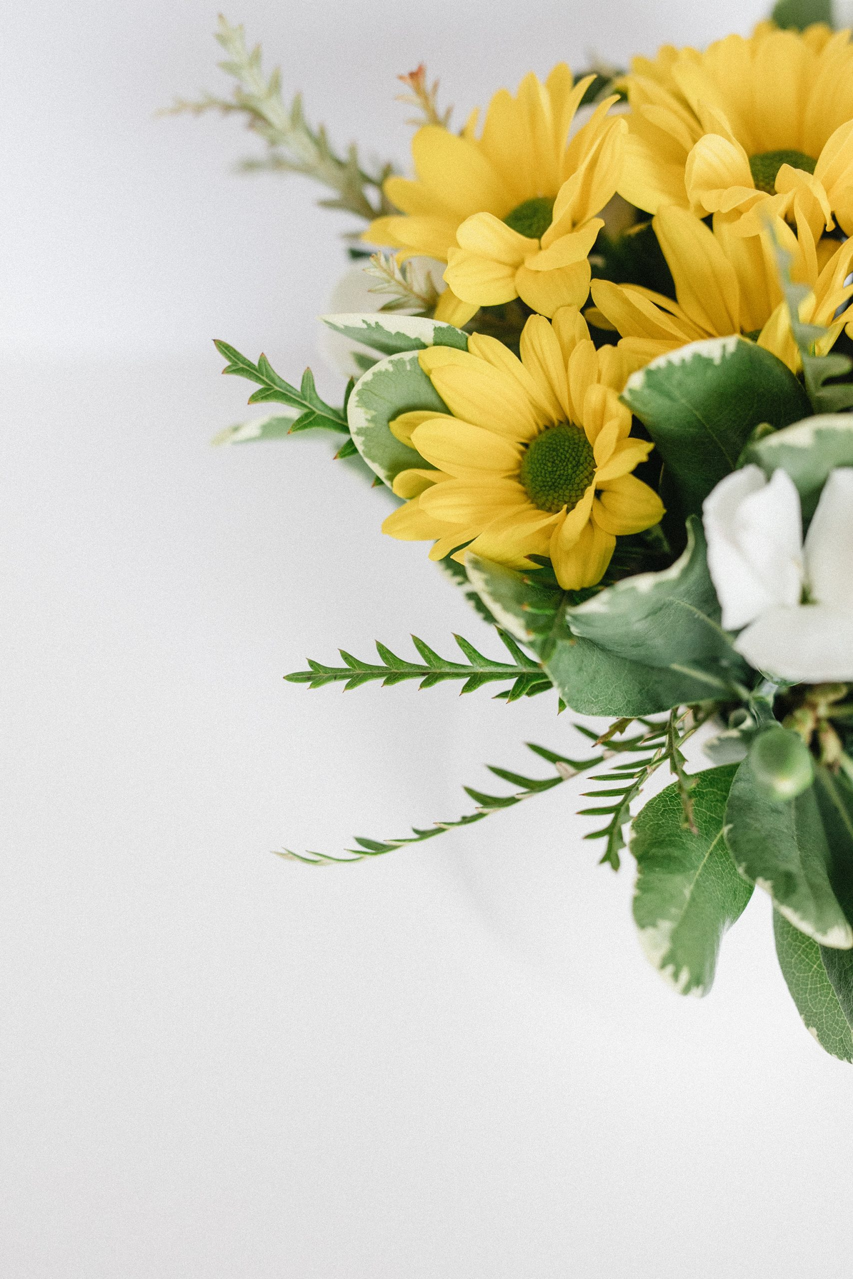 Marguerites fleurs naissance
