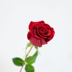 Faire livrer un bouquet de roses rouges