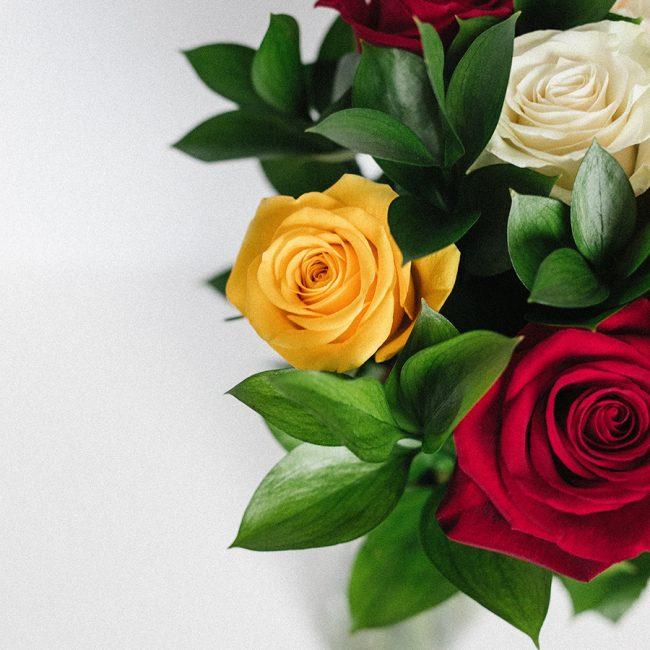 Rose rouge, rose jaune, rose blanche